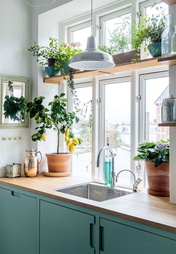 kitchen with plants