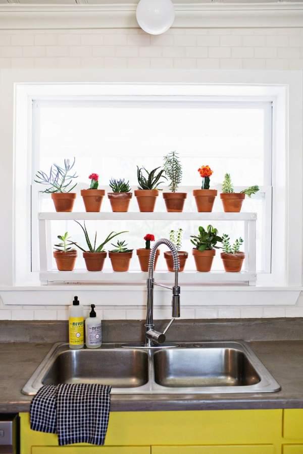 Window decorating with plants